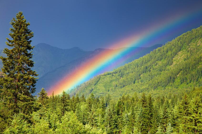 altai-rainbow-forest.jpg